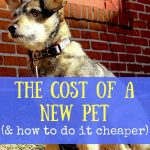 The cost of a new pet (and how to do it cheaper)
